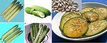 15x Koreanische Gurke Hybride Silbergrün Gurken Garten Samen Saatgut Gemüse Neu Pflanze Rarität Selten essbar gesund Gemüse Neuheit #381