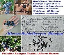 15x Riesen Heidelbeeren Blaubeere NEU Samen Garten Pflanze Süß Saatgut Obst Samen Garten Pflanze Süß Saatgut Obst #284