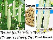 15x Riesen Weisse Gurken Samen Pflanze Rarität Garten Selten essbar gesund Gemüse Saatgut Frisch #42