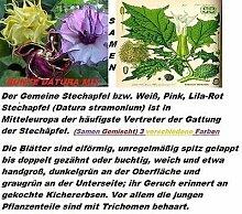 15x Seltene Datura Bunt Mix Samen Hingucker Pflanze Rarität Blumen Garten Neu #2