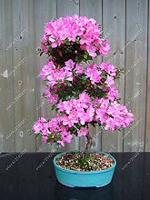 16: 20 Teile/beutel 22 Arten Azalee Blumensamen