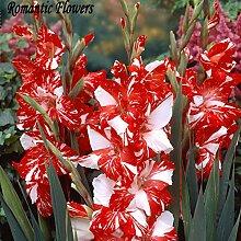 18 Farben Gladiolen Samen, 100 Partikel / Beutel