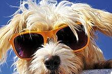 1art1 102331 Hunde - Cooler Hund Selbstklebende Fototapete Poster-Tapete 180 x 120 cm