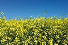 1art1 106355 Blumen - Goldenes Rapsfeld Vor