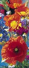 1art1 40509 Blumen - Rote Mohnblumen Fototapete Poster-Tapete 200 x 86 cm