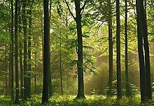 1art1 40585 Wälder - Herbst-Wald 8-teilig Fototapete Poster-Tapete 368 x 254 cm
