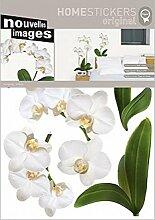 1art1 50556 Pflanzen - Weiße Orchidee Wand-Tattoo Aufkleber Poster-Sticker 70 x 50 cm