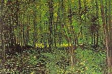 1art1 53484 Vincent Van Gogh - Bäume Und