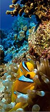 1art1 59391 Unterwasserwelt - Fische Und Korallen-Riff, 1-Teilig Fototapete Poster-Tapete 202 x 90 cm