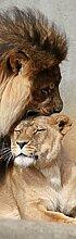 1art1 99624 Raubkatzen - Löwen, Schmusekatzen, 1-Teilig Fototapete Poster-Tapete 250 x 79 cm