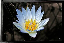 1art1 Blumen – Blütenzauber, Weiße Seerose