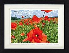 1art1 Blumen - Mohnblumenfeld Gerahmtes Bild Mit