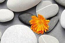 1art1 Die Natur, EIN Herz Unter Den Steinen 1-Teil