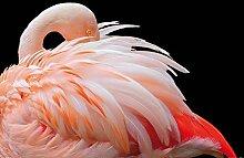 1art1 Flamingos - Flamingo Mit Schönen Federn