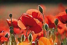 1art1 Mohnblumen - Rote Mohnblumen, Blüten Und