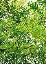 1art1 Pflanzen, Bambus 4-teilig Fototapete