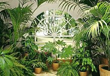 1art1 Pflanzen - Wintergarten 8-teilig Fototapete