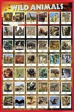 1art1 Tiere Poster und Kunststoff-Rahmen - Tiere