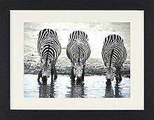 1art1 Zebras - Linie Gerahmtes Bild Mit Edlem