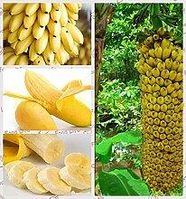 1bag = 100pcs Mini Banane Samen Fruchtsamen Seltene exotische Bonsai Banane Topf Geschenk Pflanze Dekoration Haus und Garten