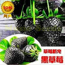 1bag = 300PCS schwarze Erdbeeresamen Bonsai Seltene Fruchtsamen Kletterpflanze ORGANIC Haus & Garten Exotische