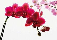 1Wall W4P-ORCHID-001 Orchidee, geblümte Wall