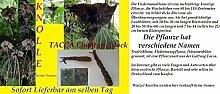 1x Wurzel Knolle Tacca Chanterii Black Fledermaus Pflanze Garten Frisch original Exotic