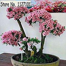 2: 100 Teile/beutel 22 arten Azalee Blumensamen