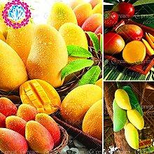 2 PC / bag Mangobaumsamen Pflanze für Hausgärten