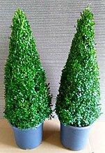 2 x Buchsbaum Kegel, Höhe: 100-110 cm, Pyramide,