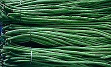 20 Korn / bag der chinesischen lange Bohnen Bohnen