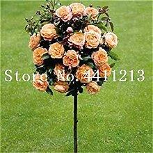 20 PC Rose Baum, Rose Blume, Baum Blume, Rose Baum