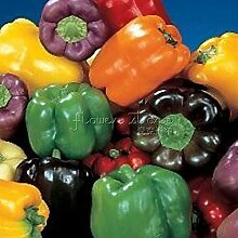 20 Regenbogen-Paprika-Samen 100% Echt Samen Qualitäts-DIY Hausgarten-Anlagen