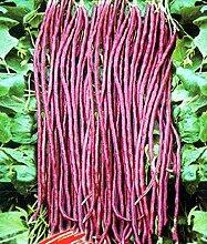 20 Samen / pack rote Bohnen Samen für Home Garten