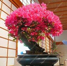 20 Teile/beutel 22 Arten Azalee Blumensamen