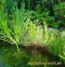 20 Uferpflanzen, 1 Seerose, ca. 40 Schwimmpflanzen