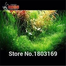 200 Aquarium Samen / Aquarium Aquarium Dekoration Grassamenpflanzen Samen Pack Pflanzen