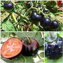 200 / bag schwarz Tomatensamen Gemüse- und Fruchtsamen Beständig gegen Krankheiten Zierpflanze Obstbaum-Sämlinge