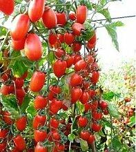 200 Gemüse Tomaten Samen Erbstück süß Gartenpflanzen Samen für den Heimgarten 3 Bepflanzung