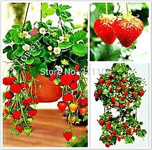 200 Pflanz Hanging Erdbeeresamen semenatsvety Garten bonsail Obst Köstliche