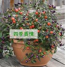 200 Samen Gartenpflanzen Peter Samen sementes Hause Bonsai Pornografische plantas Chili Gemüsesaatgut Penis Chili-Pfeffer Grün