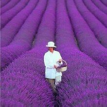200Stück/Beutel French Provence Lavendel Samen SEHR duftenden BIO Lavendel Samen Pflanze Blume Blumensamen Home Garten Bonsai chokdee Shop
