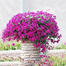 200 Stück Bonsai Petunia Samen Blumensamen