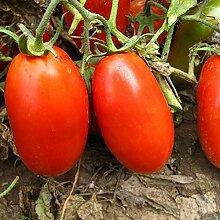 200 Stück Süße Tomatensamen Essbare