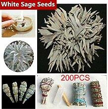 200 Stück Weißer Salbei Samen, Heilige Salvia