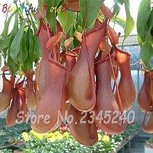 200 Stücke Moskito Nepenthes Samen