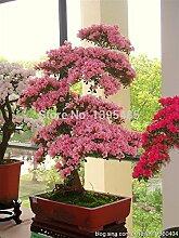 200pcs / bag französisch Provence Lavendel Samen duftend organischen Lavendel Samen Bonsai Pflanze Blumensamen-Hausgarten