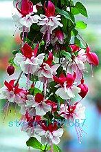200pcs / bag Fuchsia Samen, pinkfarbene Blumen,