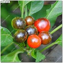 200pcs / bag Regenbogen-Kirsch Pepper Samen Seltene Außen Spicy Bonsai Topf Chile Chili Gemüse Pflanze leicht 4 to Grow