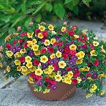 200pcs Bonsai-Mischfarbe Petunia Samen Schöne